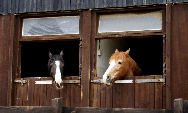 Boreholes for Stables and Race Horses